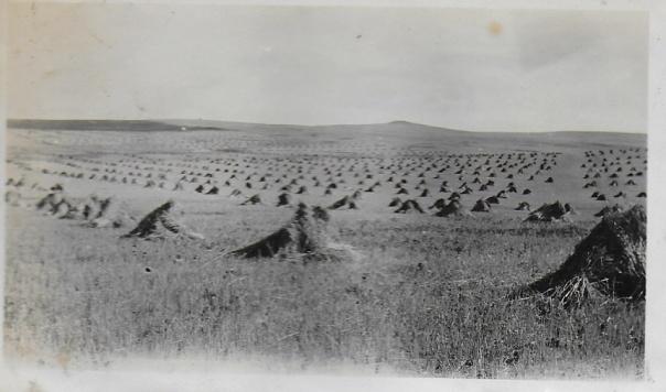 J.H. Bennett crop